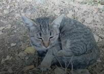 В Крыму водитель, спасая жизнь кошке, врезался в дерево, фото — «Рекламы Ялты»