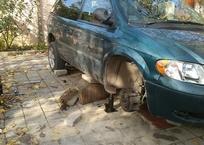 Не выдержал домкрат: крымчанина придавило собственным автомобилем, фото — «Рекламы Фороса»