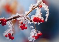 В Крыму ожидаются заморозки, дожди, снег и туман, фото — «Рекламы Фороса»