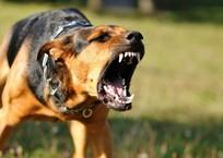 В Ялте завелась стая собак-убийц, фото — «Рекламы Гурзуфа»