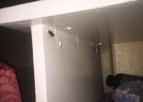 Больничный комплекс в Севастополе - жуткий рассадник тараканов СКРИНШОТ, ФОТО, фото — «Рекламы Севастополя»