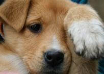 Агрессивный симферополец сбил собаку на глазах детей (фото, видео, +18), фото — «Рекламы Красногвардейского»
