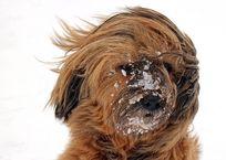 Крымчанам прогнозируют сильный ветер в пятницу, фото — «Рекламы Керчи»