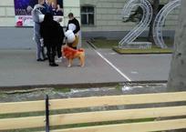 По центру Севастополя собаку-льва водили ФОТО, фото — «Рекламы Севастополя»