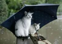 В Крыму на выходных будет ветрено и дождливо (прогноз погоды), фото — «Рекламы Щелкино»