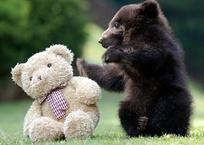 """Фотофакт: в """"Тайгане"""" родились необычные медвежата, фото — «Рекламы Керчи»"""