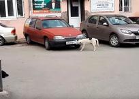 Глазам не поверишь: в Крыму завелась собака-автовор, фото — «Рекламы Крыма»