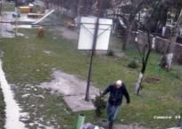 В Симферополе ищут женщину и мужчину, которые в парке вырвали елку с корнями и сбежали ВИДЕО, фото — «Рекламы Алушты»