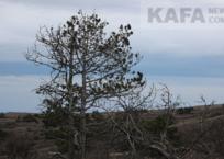 Экологическая катастрофа на Тепе-Оба - фоторепортаж, фото — «Рекламы Крыма»