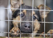 Приют для животных в Крыму вместит вольеры на 200 собак и ветклинику, фото — «Рекламы Феодосии»