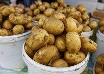 """Цена на картофель в Севастополе """"взлетела"""" до 50 рублей за кг - соцсети, фото — «Рекламы Севастополя»"""