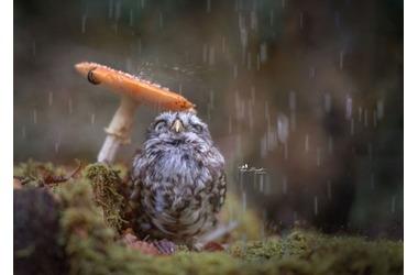 Крым зальет дождями, похолодает до нуля, фото — «Рекламы Партенита»