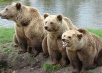 Крымский зоопарк приютит трех медведей, найденных на автостоянке в Самаре, фото — «Рекламы Щелкино»
