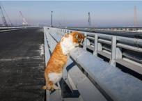 Кот Мостик измеряет отбойник Крымского моста в хвостах ФОТО, фото — «Рекламы Крыма»