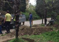 В центре Ялты выкапывают пальмы, чтобы проложить канализацию, фото — «Рекламы Крыма»