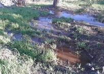 В районе Ялты разлилась канализация, фото — «Рекламы Фороса»