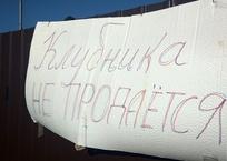 Куда исчезает крымская клубника - СМИ, фото — «Рекламы Черноморского»