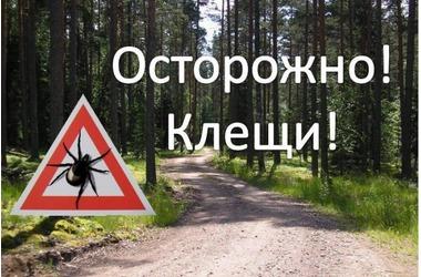 Уже более тысячу крымчан покусали клещи, фото — «Рекламы города Саки»