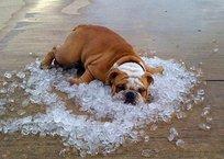 В Крыму сегодня ожидается сильная жара, фото — «Рекламы Фороса»