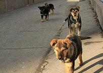 В Крыму обещают стерилизовать 7500 бездомных животных, фото — «Рекламы Крыма»