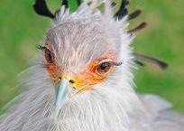 """Птица """"отключила"""" свет в крымских селах, фото — «Рекламы Щелкино»"""