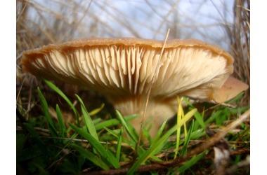 В крымском монастыре 14 человек отравились грибами, фото — «Рекламы Фороса»