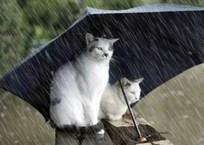 Сильные дожди и ветер: синоптики рассказали о погоде в Крыму на 14 сентября, фото — «Рекламы Крыма»