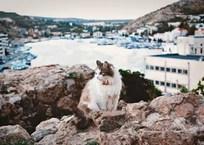 Крым находится под влиянием антициклона, фото — «Рекламы Севастополя»
