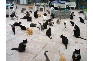 Кошкин дом: хозяйку крымской виллы заставляют переселить животных в приют, которого нет, фото — «Рекламы города Саки»