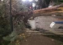Бескомпромиссная стихия: непогода в Крыму крушит автомобили, валит деревья и сносит все на своем пути ФОТО, фото — «Рекламы Щелкино»