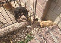 Севастопольские экологи выявили нарушения в приюте для бездомных животных ФОТО, фото — «Рекламы Севастополя»
