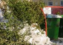 Севастопольцев призывают относить елки к контейнерам, фото — «Рекламы Севастополя»