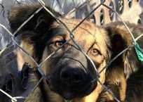 Налог на животных в Крыму: платить или выкинуть питомца?, фото — «Рекламы города Саки»