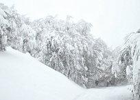 На Ай-Петри сошло несколько лавин, фото — «Рекламы Черноморского»