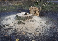 В Симферополе анонсировали снос трех сотен деревьев, фото — «Рекламы Симферополя»