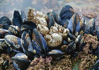 Category_mussel-3593218_960_720