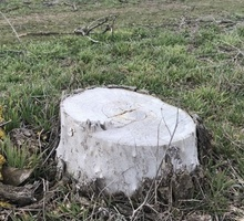 Mini_tree-800x429-41d