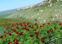 Красоты Крыма: что посмотреть и чему удивиться этой весной ФОТО, фото — «Рекламы Красноперекопска»