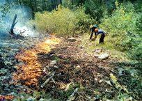 Крымские леса поджигают намеренно — Минприроды Крыма, фото — «Рекламы Фороса»