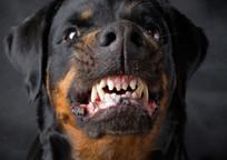 Category_dogbite_shutterstock_28553435_small