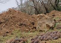 На Историческом бульваре в Севастополе нашли арсенал боеприпасов ФОТО, фото — «Рекламы Севастополя»