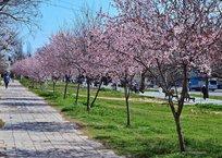 К Пасхе в Севастополь окончательно вернется весеннее тепло, фото — «Рекламы Севастополя»