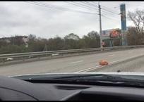 Ялтинскую трассу оцепили из-за подозрительного предмета ВИДЕО, фото — «Рекламы Партенита»