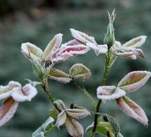 Mini_ground-frost-3826835_960_720-1
