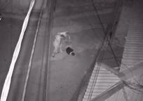 Жестокое избиение крымчанина попало на видеокамеры ВИДЕО, фото — «Рекламы Алушты»