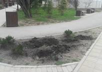 В Севастополе евпаторийца осудили на два года строгого режима за кражу деревьев из парка, фото — «Рекламы Севастополя»