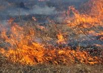 В Крыму массово горят поля, фото — «Рекламы Симферополя»