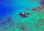 Top_news_scuba-diver-1049945_960_720