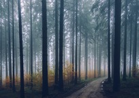 Category_forest-2179318_960_720