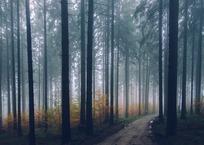 В крымском лесу нашли тело 17-летнего спортсмена из Мурманска, фото — «Рекламы Крыма»